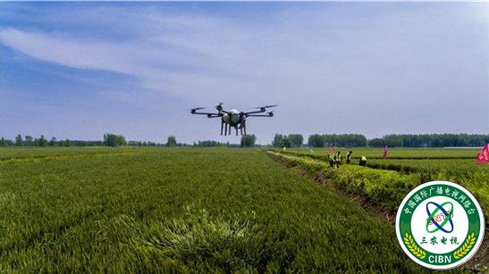 山东临沂兰陵镇十万亩小麦 用上植保无人机