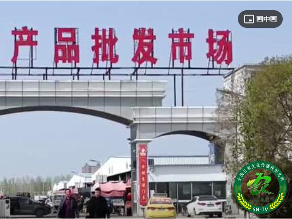 (视频)江苏灌云县淮连市场空手套白狼害惨数百人